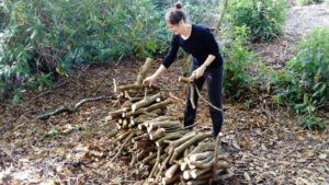 Woodland Management Day @ Tortworth Forest Centre
