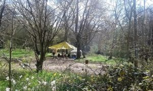 After School Club with Robinson's Discovery Tree @ Tortworth Arboretum